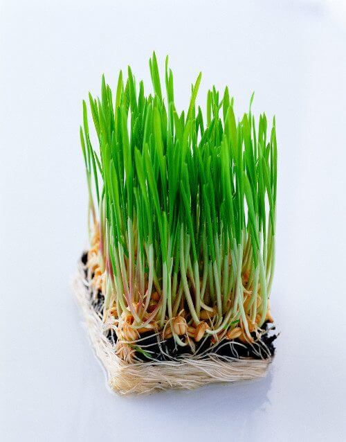 herbs-articles-plr-pack
