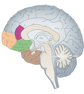 Brain and Memory PLR Articles